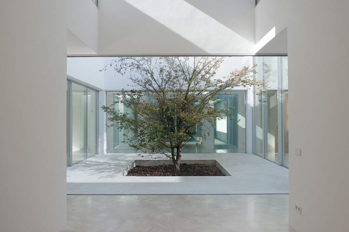 árbol en terraza interior