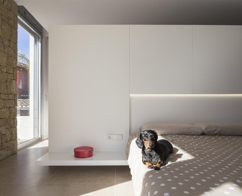 perro en cama con luz